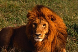 Are you getting the lion's share of business?