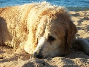 Dogs: A marketer's best friend
